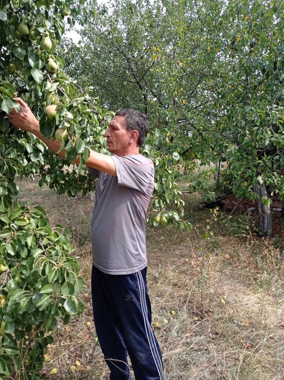 Почему не плодоносит яблоня: что делать.