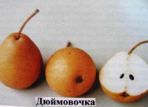 Плоды сорта Дюймовочка.