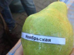 Груша Ноябрьская.